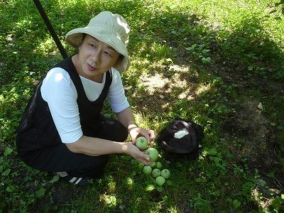 弘前のりんご園で摘果作業体験